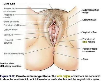 adult female genital mutilation