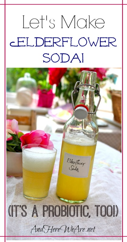 Let's Make Elderflower Soda (It's a probiotic, too!) - And ...
