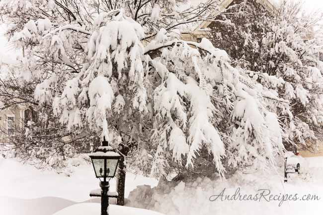 Andrea Meyers - Front tree, Blizzard of 2010