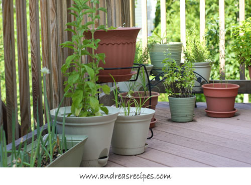 Andrea's Recipes - Container garden