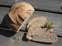 Beginning with Bread, Rosemary Olive Oil Sourdough