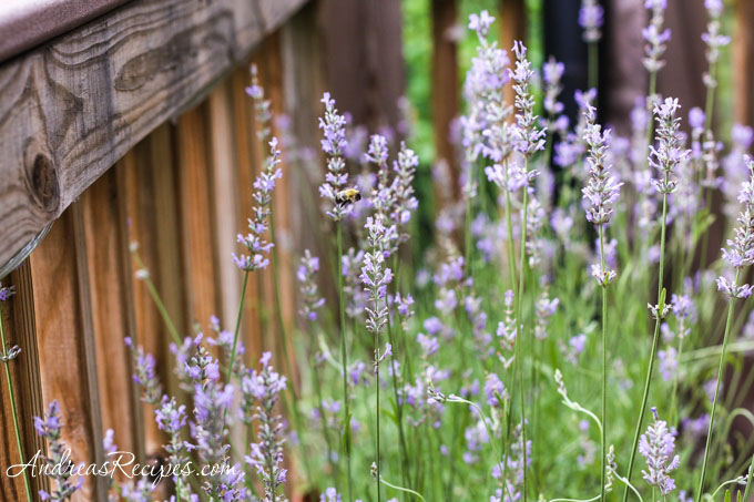 Andrea's Recipes - Lavender blossoms