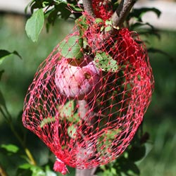 Protecting Plums with Mesh Produce Bags - Andrea Meyers