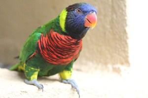 the open air aviary in Kuala Lumpur is a giant park where birds can roam free (Kuala Lumpur, Malaysia, 2011)