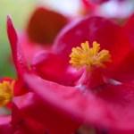 <b>flowers, raindrops and macro photography</b>