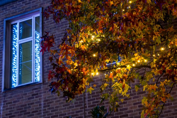 Due to the mild autumn, there is still a great deal of colour left on the trees around the Town Hall – the Christmas lights have beaten them at looking wintry.