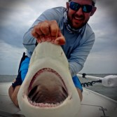 Blacktip-Shark-1024x1024