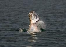 Tarpon Fishing - Florida