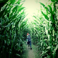 Sorry to be corny but there's something a-maze-ing at The Farm at Swan's Trail (near Seattle, Wa)