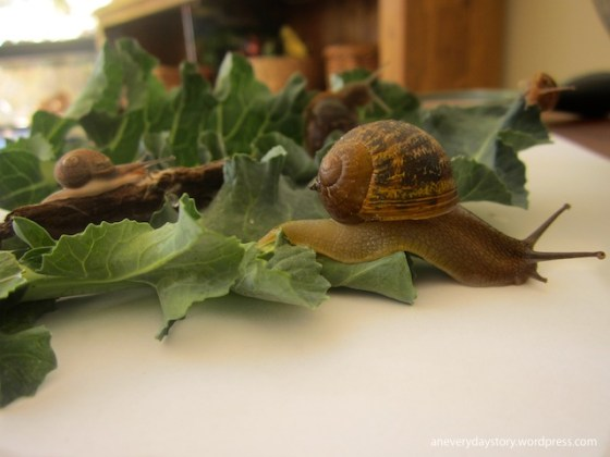 hands on science activities for preschoolers observing snails an everyday story Observing Snails