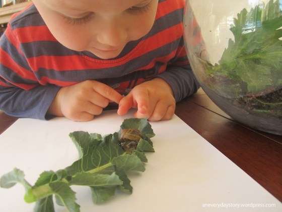 montessori hands on science activities observing snails an everyday story Observing Snails