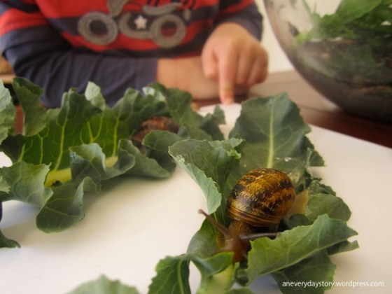 reggio science activities observing snails with preschoolers an everyday story Observing Snails