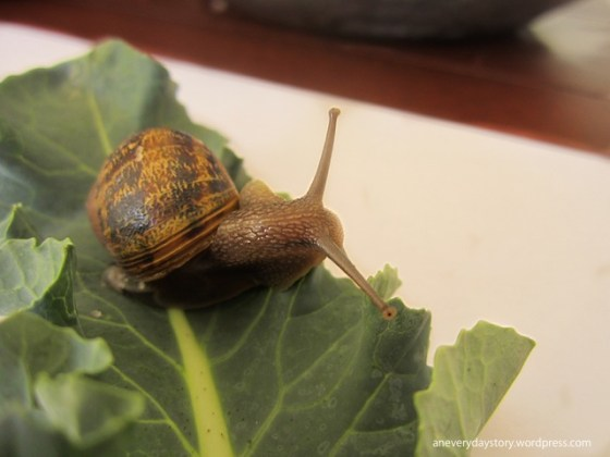 reggio science activities snails an everyday story Observing Snails