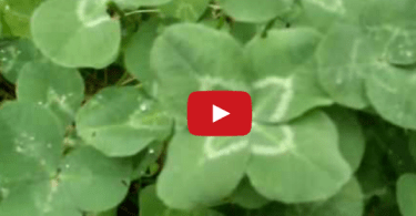 how-to-find-a-four-leaf-clover-2-snap