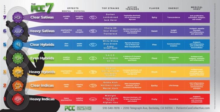 understanding Cannabis strain infographics