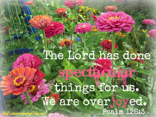 Pink Zinnias | The Lord has done spectacular things for us. Psalm 126:3 | AnExtraordinaryDay.net