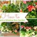 How to Plant a Window Box Garden :: AnExtraordinaryDay