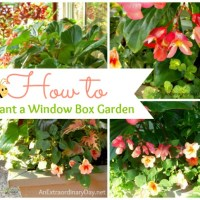 How to Plant a Window Box Garden :: Tutorial & Planting Tips