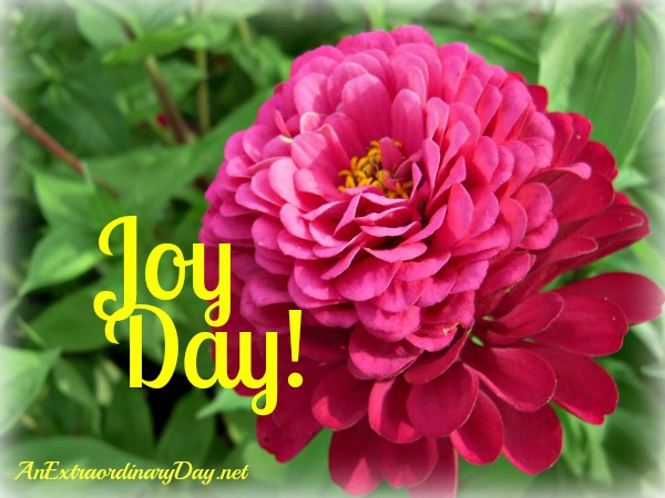 Pretty-Pink-Zinnia-Joy-Day-AnExtraordinaryDay-net