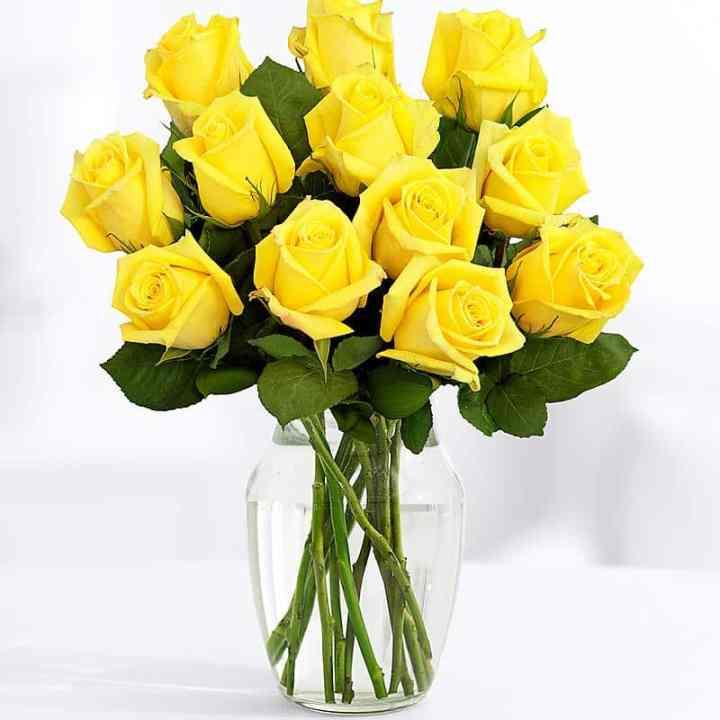 11 Длинных Желтых Роз