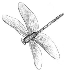 Angela-Lund-Dragonfly-2