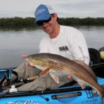 Redfish like these are under threat from algae blooms in the Gulf.