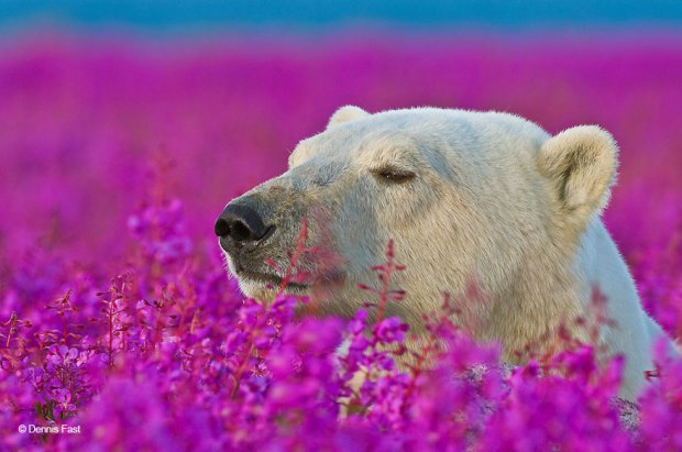animals-smelling-flowers-421__880