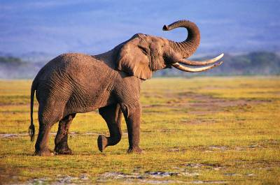 elephants | Animal Blawg