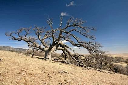 drought_worst_millenium-02