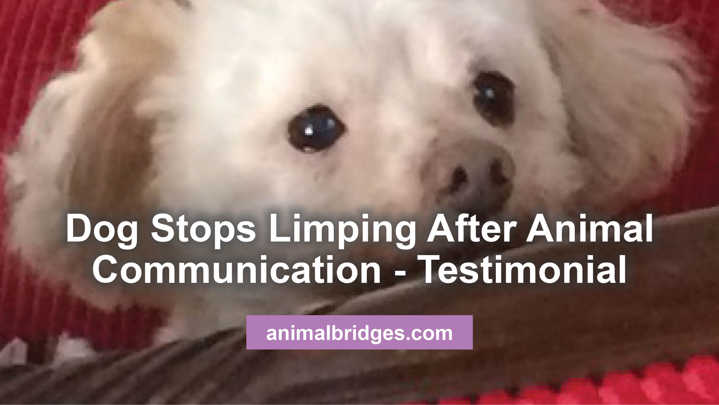 Genial Dog Ss Limping After Animal Communication Testimonial Dog Ss Limping After Animal Communication Testimonial My Dog Is Limping What Could It Be My Dog Is Limping What Can I Give Him bark post My Dog Is Limping