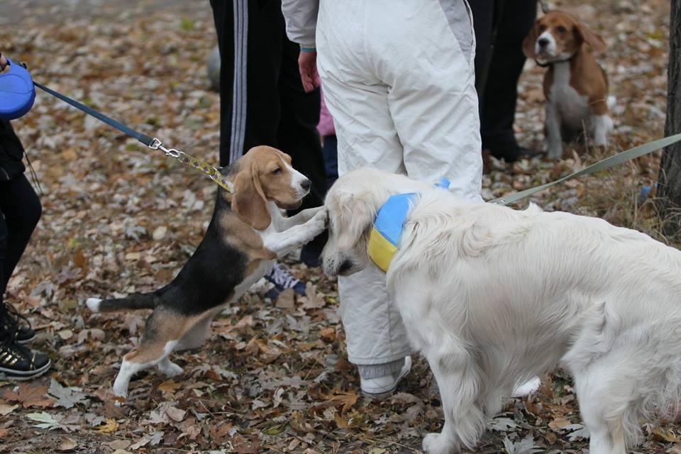 Наш перший захід Sport Dog Show в Місті Тварин