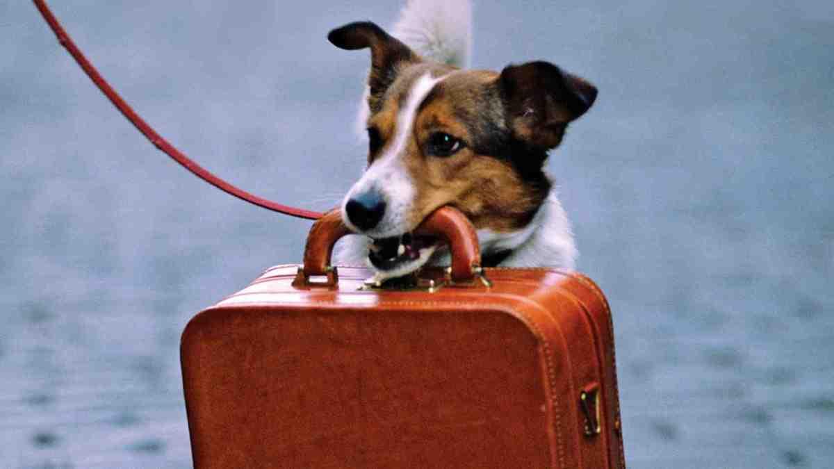 З собакою у відпустку