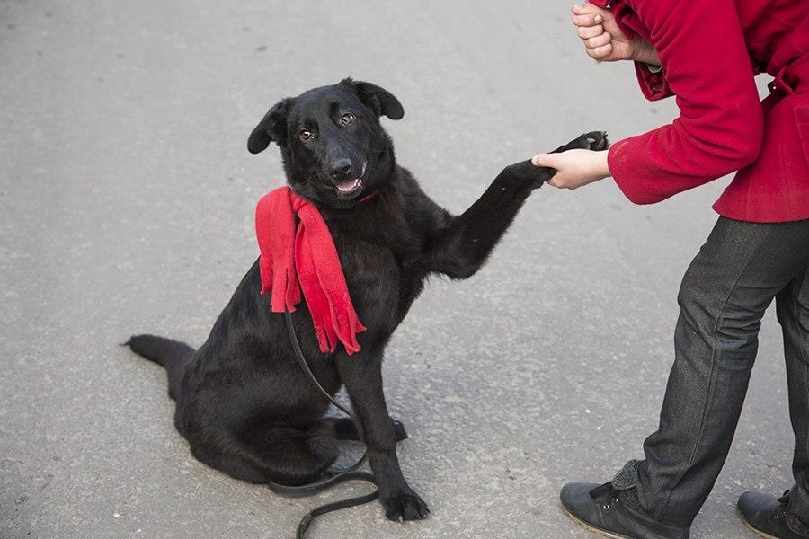 """Я та мій пес – команда! Освітньо-розважальний захід """"Міста тварин"""""""