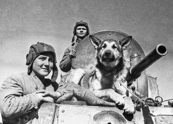 Собаки на війні - Друга Вітчизняна та наші часи