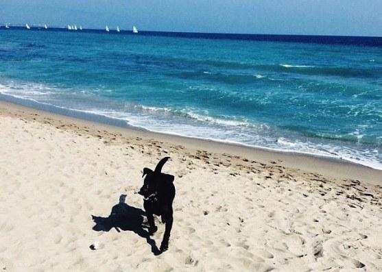 dog-beach-poetto