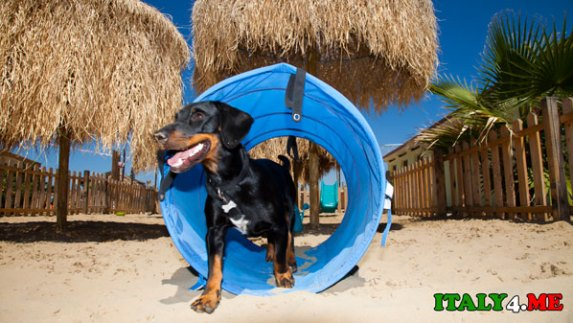 пляж-для-собак-Римини-2