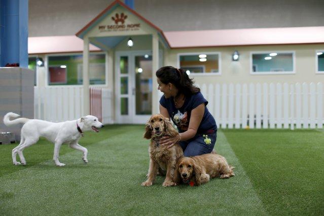 У Дубаї відкрили найбільший у світі критий комплекс для собак