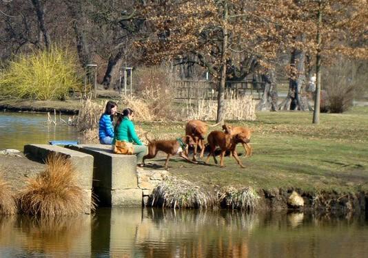 Поводження з тваринами у Чехії на прикладі Праги