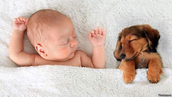 150723132204_pets_baby_doggy_624x351_thinkstock