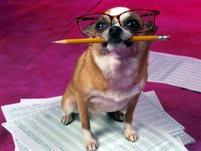 Роздавальники сосисок пошукали теорію розуму в головах собак