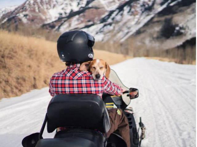 Унікальний проект фотографа та врятованої собаки
