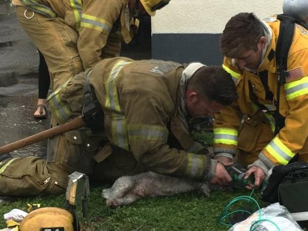 У США пожежний врятував собаку, який постраждав під час пожежі.