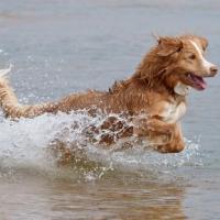 Як привчити собаку купатися у водоймах?
