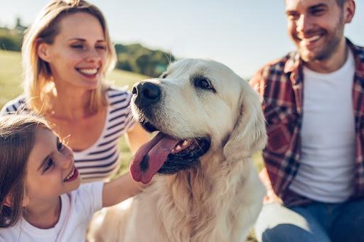 Собака, як молодший член родини