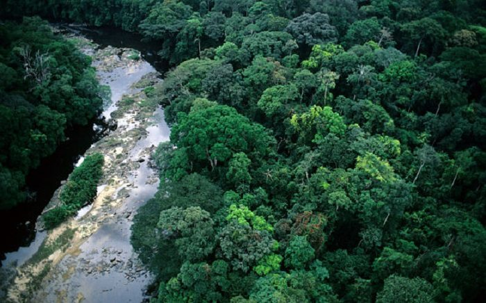 tropical-rainforest-in-africa