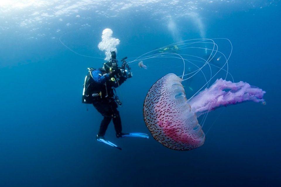 Colourful-jellyfish