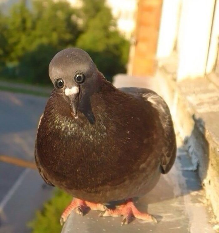 1-hilarious-animals-with-eyes-on-front
