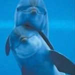 delfines mejores amigos