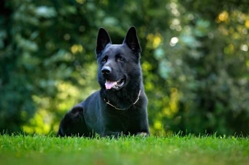 Medium Of Dog Breeds That Start With B