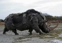woolly rhino facts